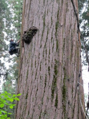 So You Want My Job: Arborist / Tree Trimmer