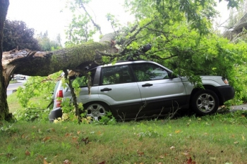 Tree company helps when large ash tree falls on car