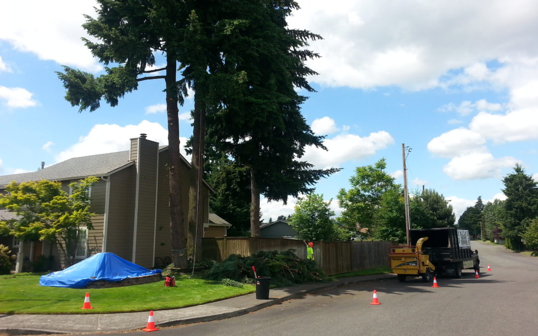 Are homeowners responsible for tree care-related accidents on their property?